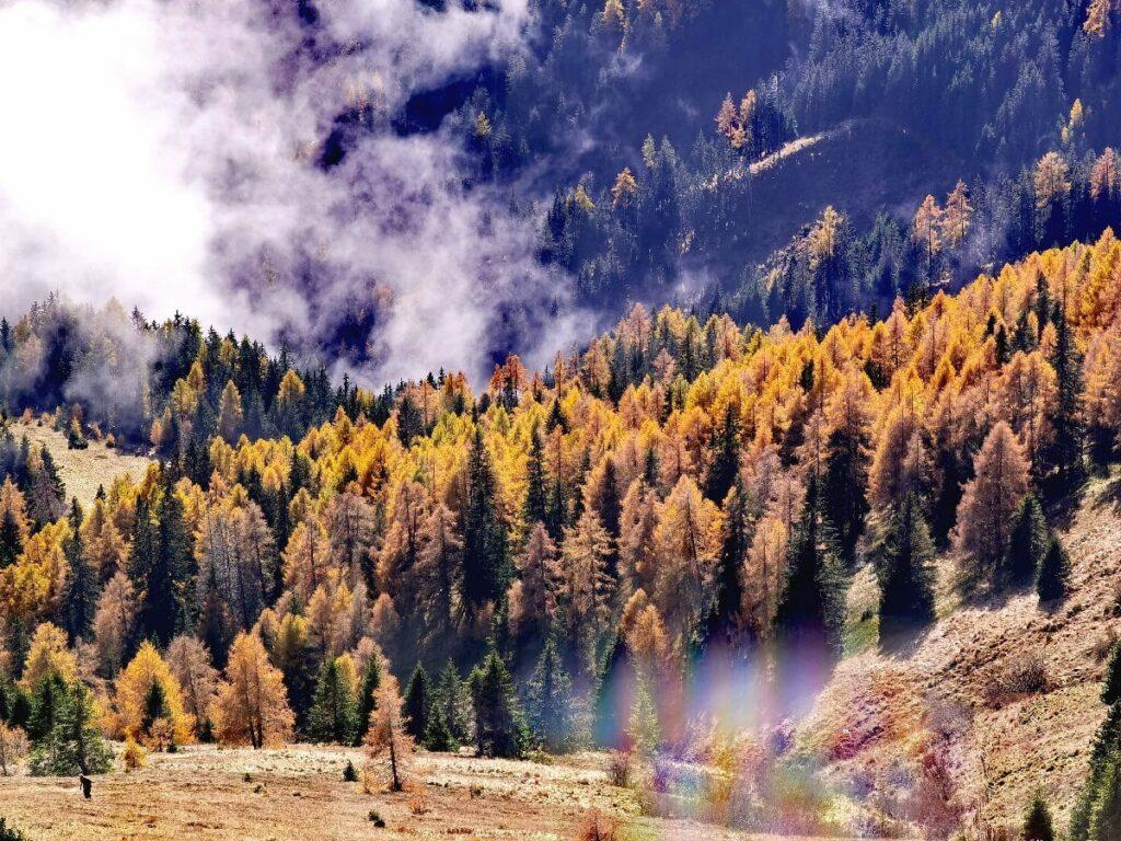 Wandern im Herbst - mit der einmaligen Lärchenfärbung