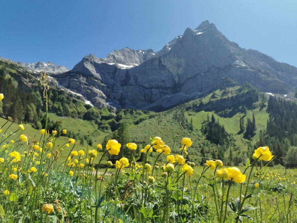 Wandern im Frühling nahe München - Am Naturdenkmal Großer Ahornboden