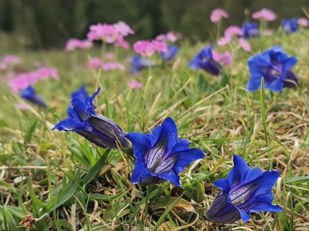 Frühlingswanderung zu den bunten Blumenwiesen