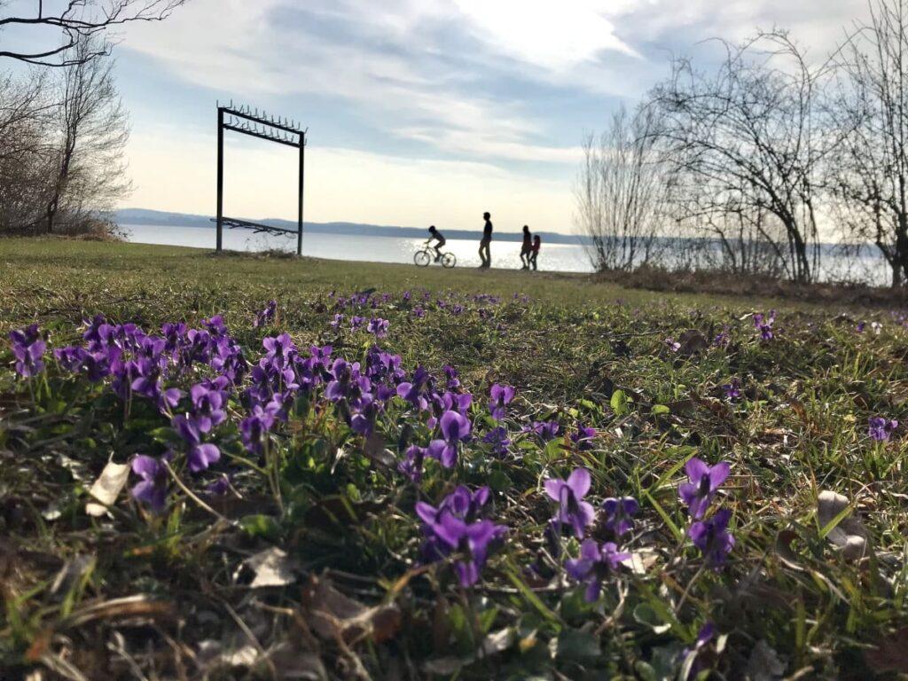 Frühlingswanderung München - die Gourmetwanderung am Starnberger See