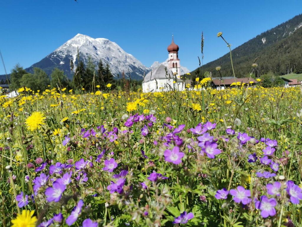 Im Wettersteingebirge im Frühling wandern - mit den bunten Blumenwiesen