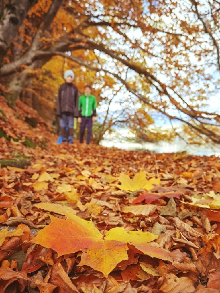 Wanderwege Herbst - am schönsten mit der bunten Blattfärbung