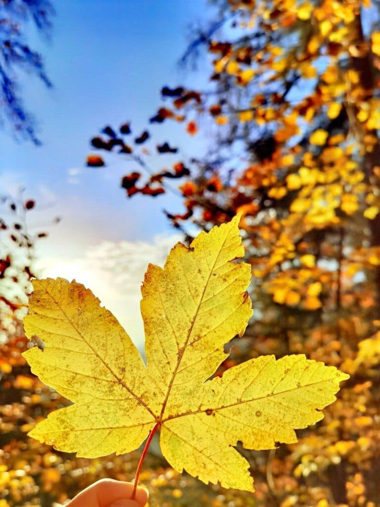 Herbstwanderung Bayern - im bunten Blätterwald