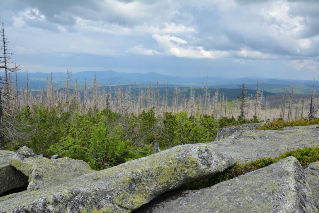 Bayerischer Wald wandern: Das ist die Aussicht am Lusen Gipfel