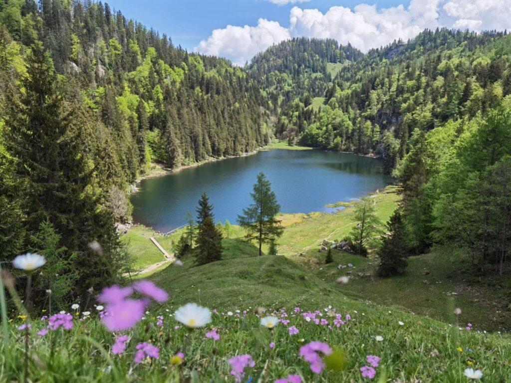 Chiemgauer Alpen wandern - so schön ist es am Taubensee